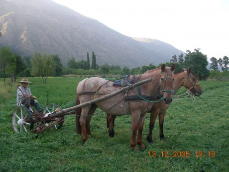 grass mower pulled by horses