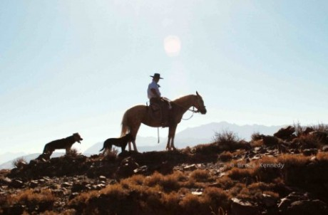 Our guide Leo, Chilean mountain horseman with his dogs