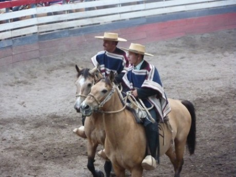 Chilean rodeo rider - father & son partners